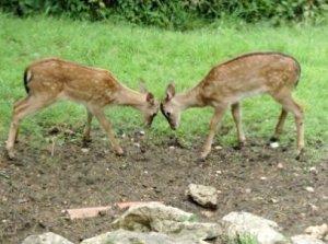Bath House deer
